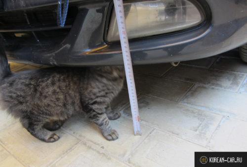 Дорожный просвет передний бампер и котёнок пиксель